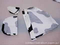 ペット服(牛コスプレ)の写真33