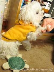 ペット(犬の福袋)のネタバレ写真13