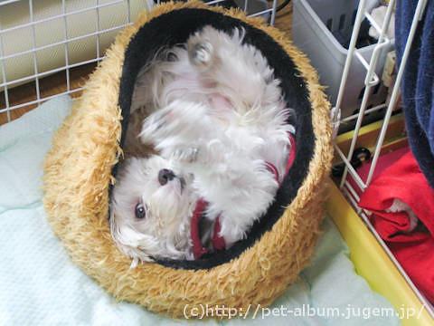 ミル(犬)の写真2