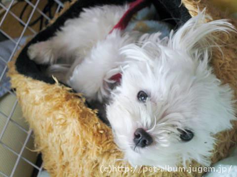 ミル(犬)の写真4