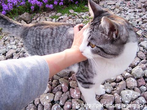 ミア(猫)の写真2