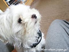 ミル(犬)の写真5