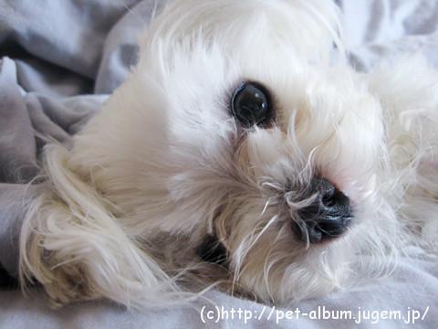 ミル(犬)の写真1
